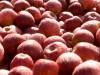 Jabłka z naszego sadu